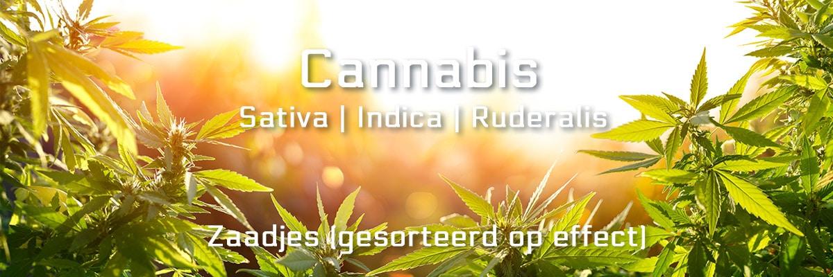 Cannabis salvia, indica, ruderalis van Smartshop SmartPalace