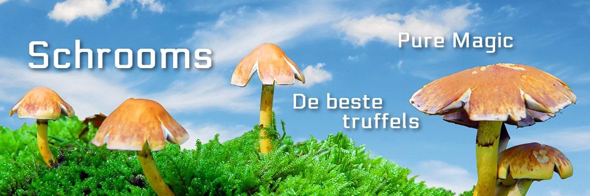 Shrooms, magic mushrooms, truffels, paddos van Smartshop SmartPalace