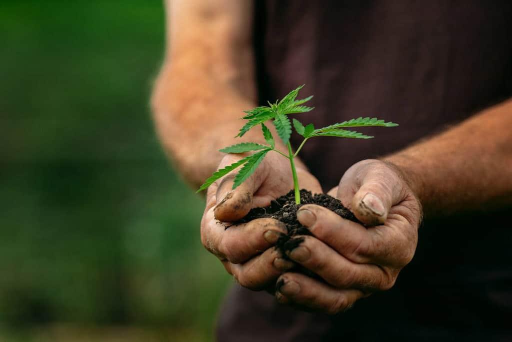 Wietzaadjes kweken